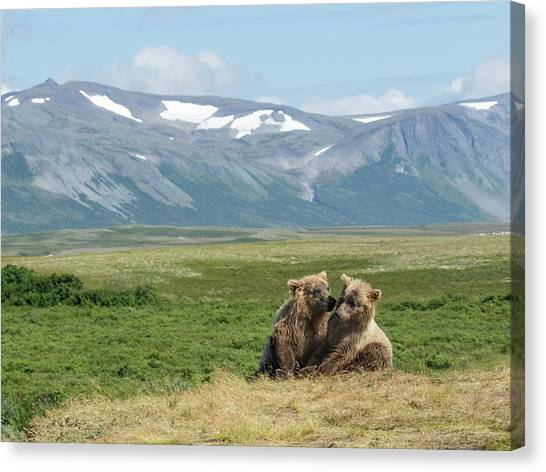 Cubs Playing On The Bluff Canvas Print