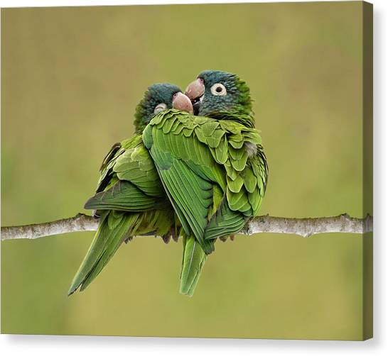 Cuddle Time Canvas Print