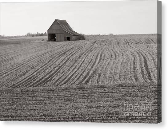 Cultivation Canvas Print by Lionel F Stevenson