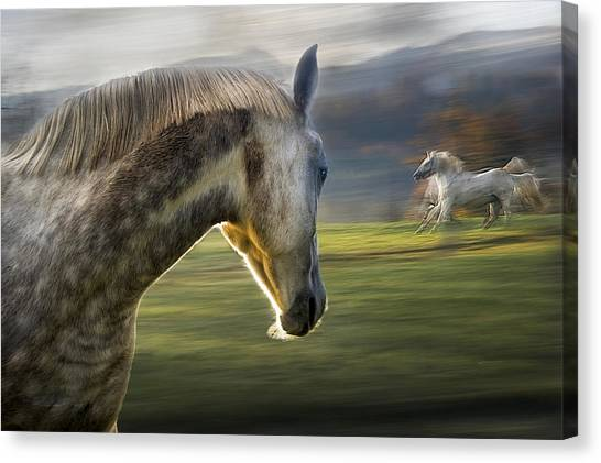 Horse Galloping Canvas Print - Curiosity by Milan Malovrh