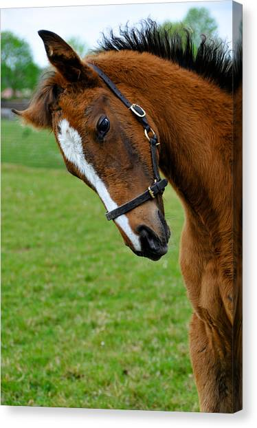 Curious Baby Canvas Print by Pat Shawyer