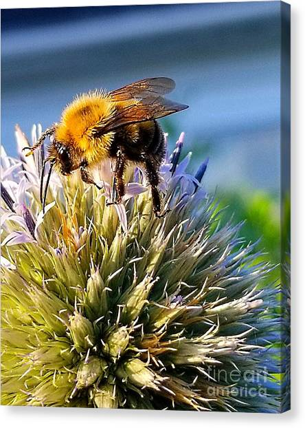 Curious Bee Canvas Print