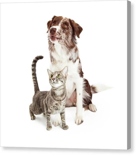 Border Collies Canvas Print - Curious Cat And Dog Looking Up by Susan Schmitz