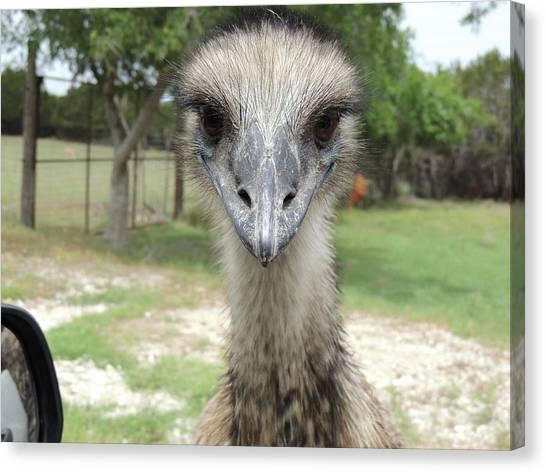 Curious Emu At Fossil Rim Canvas Print