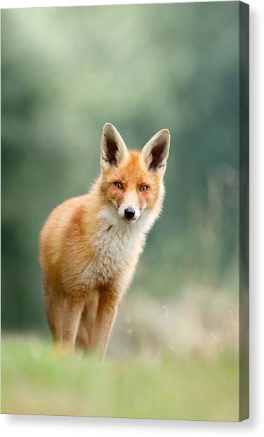 Foxes Canvas Print - Curious Fox by Roeselien Raimond
