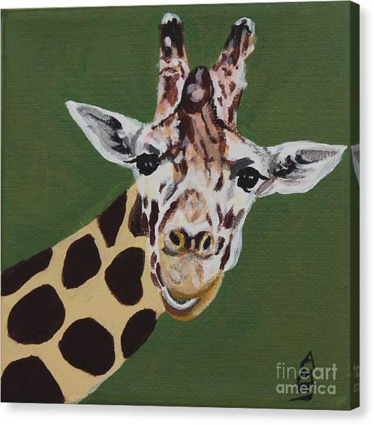 Curious Giraffe Canvas Print