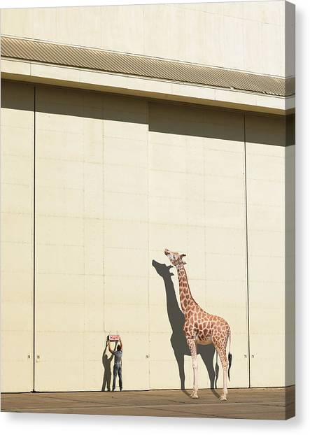 Giraffes Canvas Print - Curious Giraffe by Richard Newstead