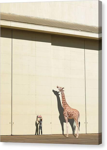 Giraffes Canvas Print - Curious Giraffe by Richard Newstead