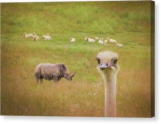 Ostriches Canvas Print - Curious Ostrich And White Rhino by Tom Mc Nemar