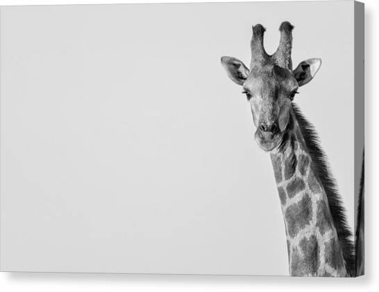 Canvas Print featuring the photograph Curious by Rand