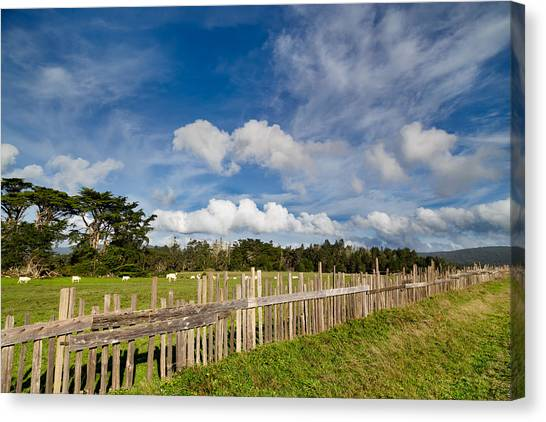 Bishop Hill Canvas Print - Curly Lane Cattle Fence by Kathleen Bishop