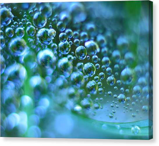 Curve Of The Web Canvas Print