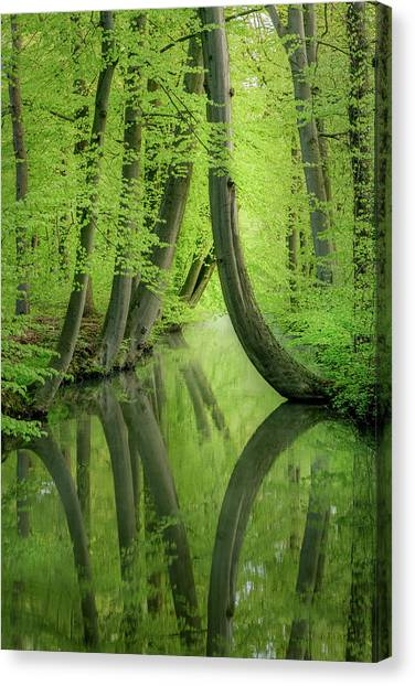 Curved Trees Canvas Print