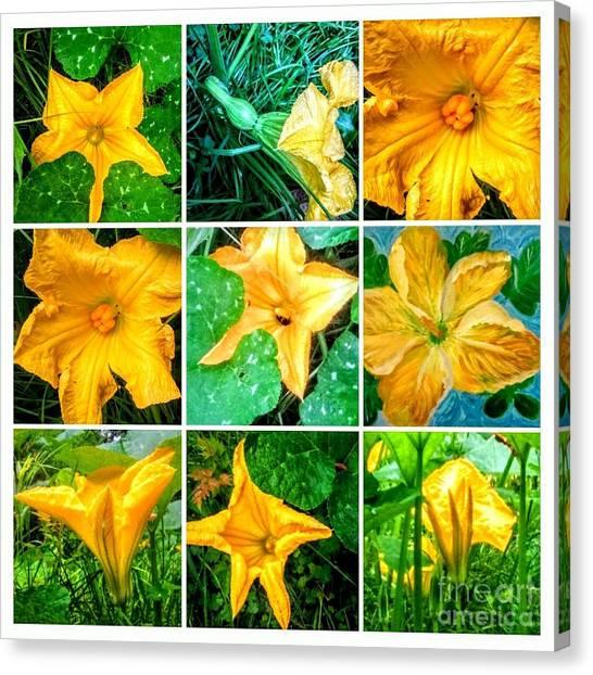 Hoodie Canvas Print - Cushaw Blossom Collage by Seaux-N-Seau Soileau