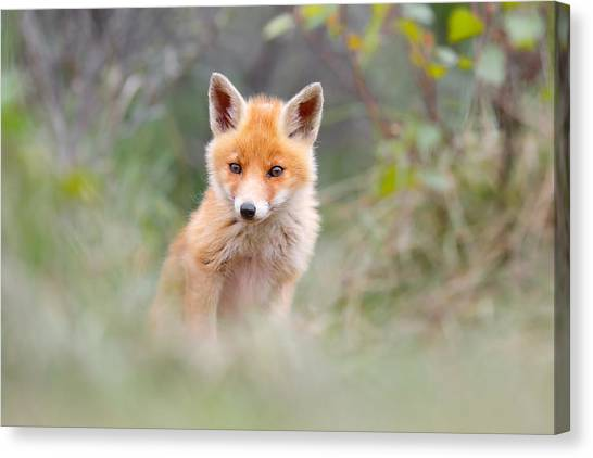 Camouflage Canvas Print - Cute Baby Fox by Roeselien Raimond