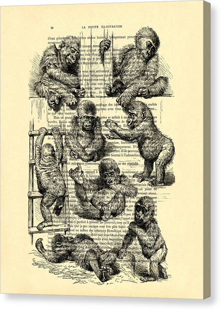 Old Masters Canvas Print - Baby Monkeys Playing Black And White Antique Illustration by Madame Memento