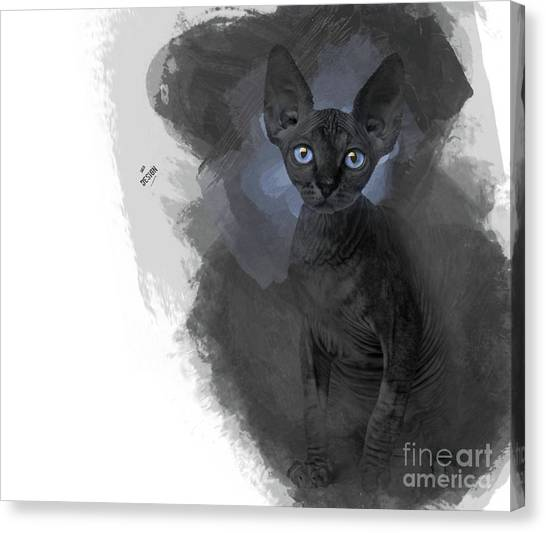 Sphynx Cats Canvas Print - Cute Black Blue-eyed Sphynx Looking At You by Maria Astedt