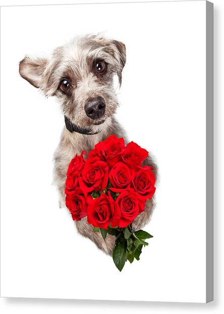 Cute Dog With Dozen Red Roses Canvas Print