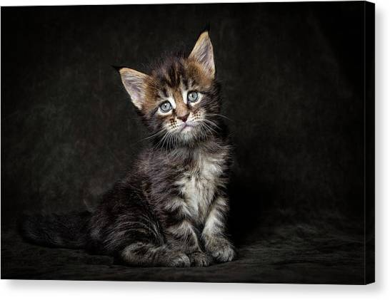 Cute Face Canvas Print