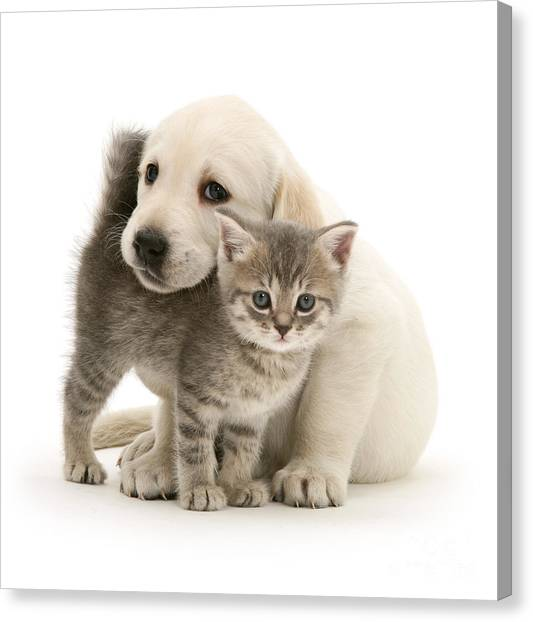 Cute Kitten And Perfect Puppy Canvas Print