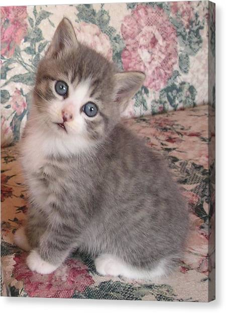 Cute Kitty Canvas Print by Allison Prior