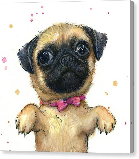 Pugs Canvas Print - Cute Pug Puppy by Olga Shvartsur