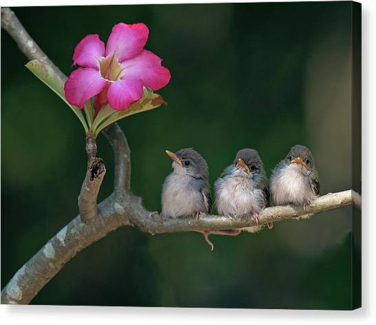 Consumerproduct Canvas Print - Cute Small Birds by Photowork by Sijanto