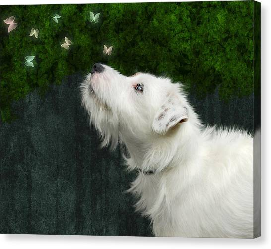 Cute White Jack Russel Dog Canvas Print