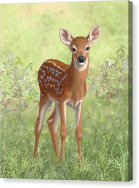Cute Fawn Canvas Print - Cute Whitetail Deer Fawn by Crista Forest