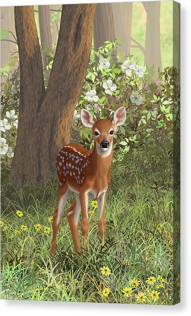 White-tailed Deer Canvas Print - Cute Whitetail Fawn by Crista Forest