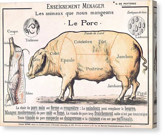 Farm Animals Canvas Print - Cuts Of Pork by French School