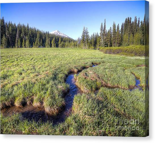Bachelor Canvas Print - Cutting Through The Meadow by Twenty Two North Photography
