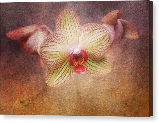 Orchid Canvas Print - Cymbidium Orchid by Tom Mc Nemar
