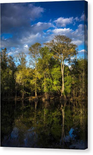 Bass Fishing Canvas Print - Cypress And Oaks by Marvin Spates