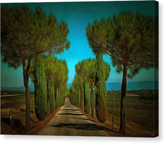Cypress Avenue Canvas Print