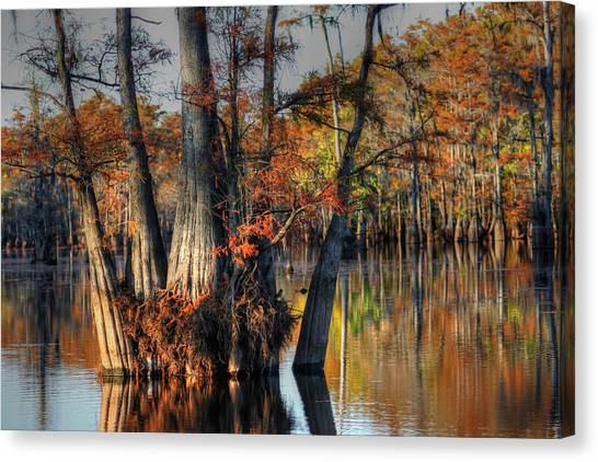 Cypress Group  Canvas Print