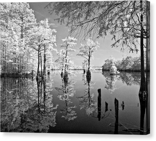 Cypress In Walkers Mill Pond Canvas Print