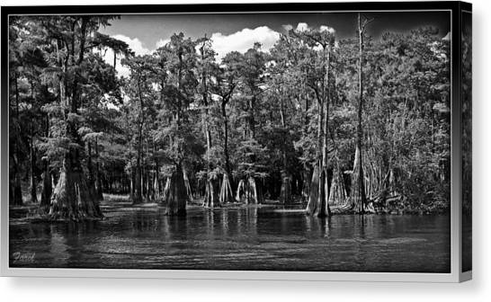 Cypress On The Suwannee Canvas Print