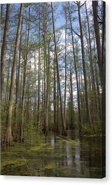 Canvas Print featuring the photograph Cypress Pond by Dylan Punke