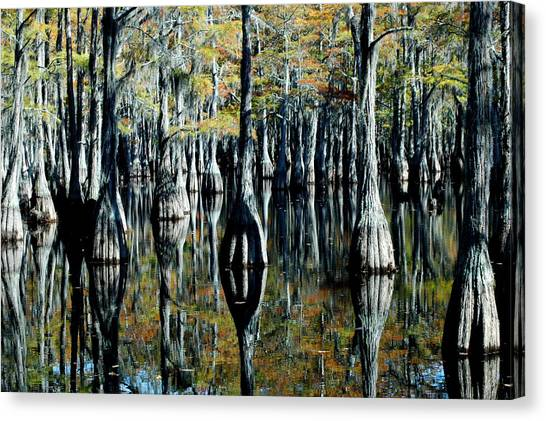 Cypress Reflections Canvas Print