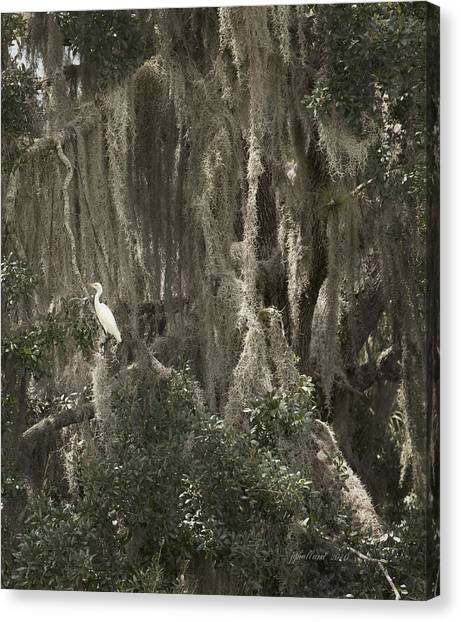 Great Cypress Canvas Print - Cypress Swamp Spanish Moss by Joseph G Holland