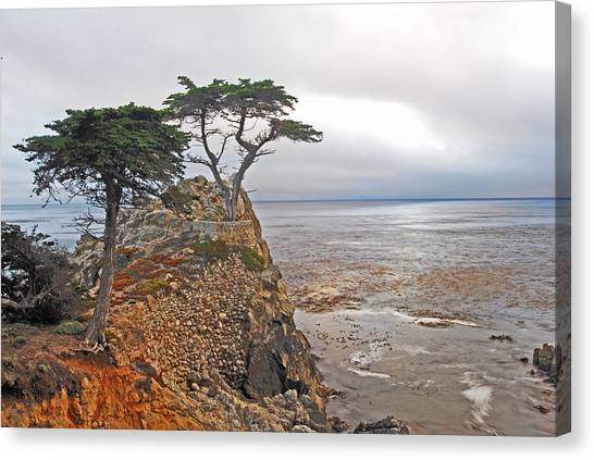 Cypress Tree At Pebble Beach Canvas Print