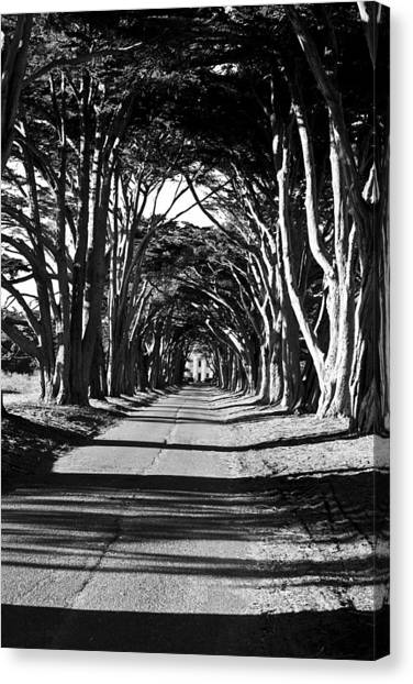 Cypress Tree Tunnel Canvas Print