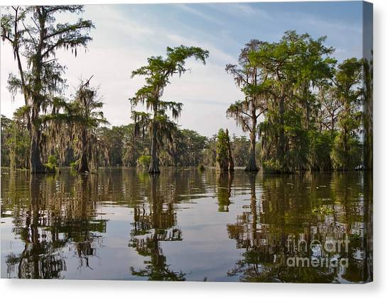 Atchafalaya Basin Canvas Print - Cypress Trees And Spanish Moss In Lake Martin by Louise Heusinkveld