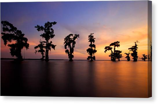 Cypress Trees Canvas Print