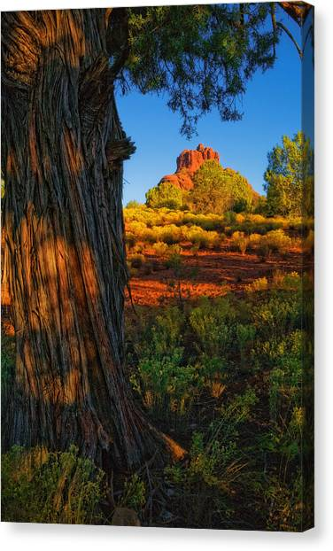 Cypress With Bell Rock Canvas Print
