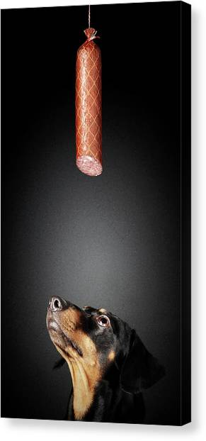 Dachshunds Canvas Print - Dachshund Looking Up At Salami by Johan Swanepoel