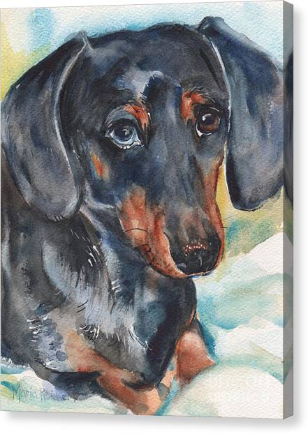 Watercolor Pet Portraits Canvas Print - Dachshund Portrait In Watercolor by Maria's Watercolor