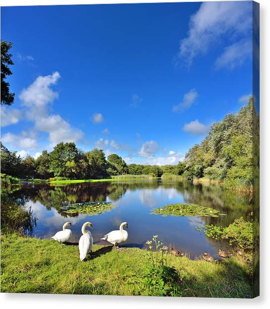 Dafen Pond Canvas Print