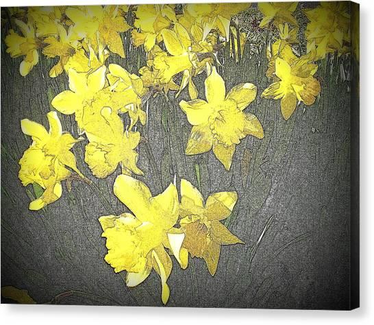 Daffodil 2-pencil Etch Canvas Print